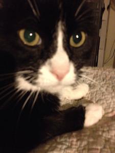 my cat loki