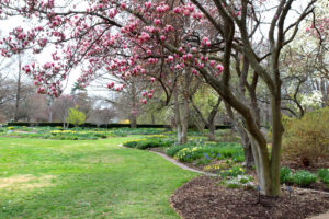 view of garden with magnolia trees and bulbs in bloom